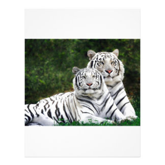White Bengal Tigers Letterhead