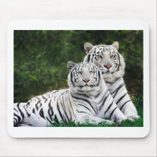 White Bengal Tigers Mouse Pad