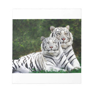 White Bengal Tigers Note Pads