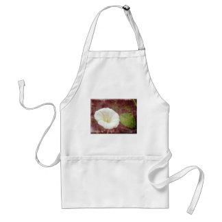 White Bindweed - The Wild Perennial Morning Glory Aprons