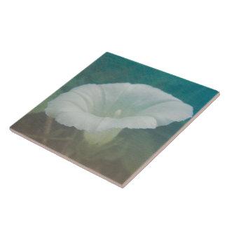 White Bindweed - The Wild Perennial Morning Glory Ceramic Tile