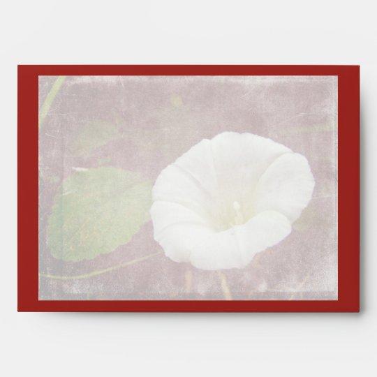 White Bindweed - The Wild Perennial Morning Glory Envelope