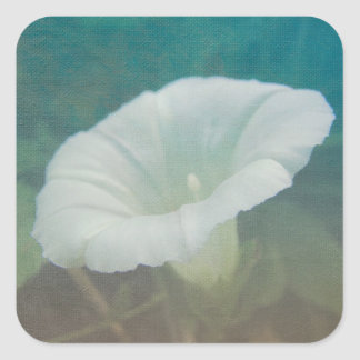 White Bindweed - The Wild Perennial Morning Glory Square Stickers