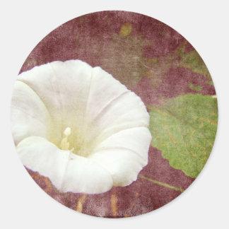 White Bindweed - The Wild Perennial Morning Glory Round Sticker
