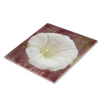 White Bindweed - The Wild Perennial Morning Glory Tile