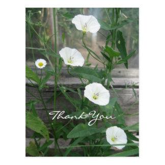 White Bindweeds Postcard