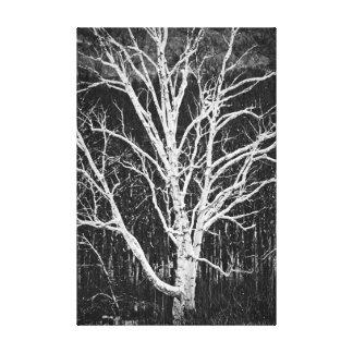 White Birch Tree In Winter Black And White Photo Canvas Print