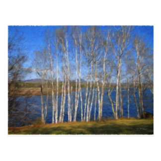 White Birch Trees in Searsport Maine Postcard
