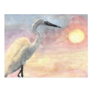 White Bird at beach sunset Postcard