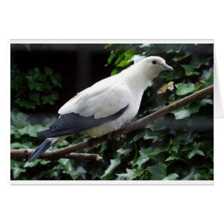 White Bird Card