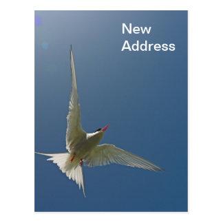 White Bird in Flight New Address Postcard