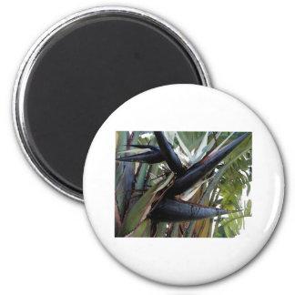 white bird magnet