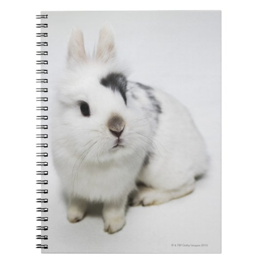 White, black and brown rabbit notebook
