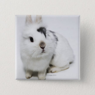 White, black and brown rabbit pinback button