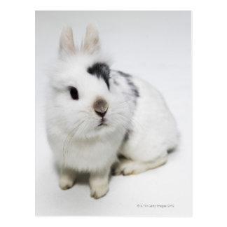 White, black and brown rabbit postcard