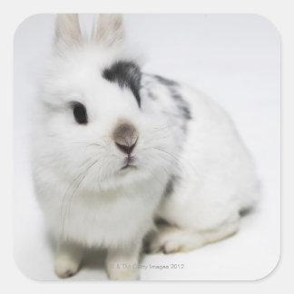White, black and brown rabbit square sticker