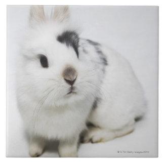White, black and brown rabbit tile