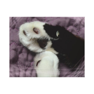 white black cat paws purple back grunge gallery wrapped canvas