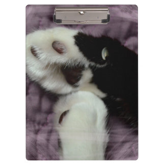 white black cat paws purple back grunge clipboard