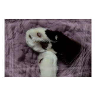 white black cat paws purple back grunge posters