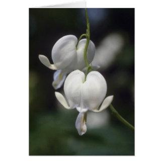 white Bleeding Heart, (Dicentra Spectabilis) flowe Cards