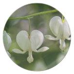 White Bleeding Hearts Flowers Dinner Plate