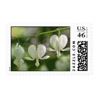 White Bleeding Hearts Flowers Postage Stamps