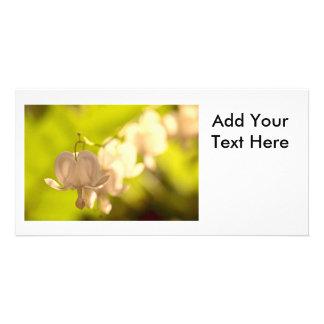 White Bleeding Hearts Photo Photo Card Template