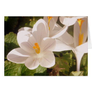 White Bloom Dappled Light Card