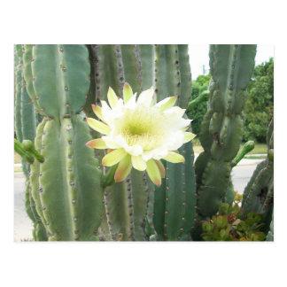 White Bloom On Cactus Postcard