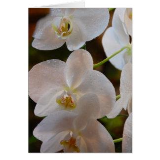 White Bloom VI Card