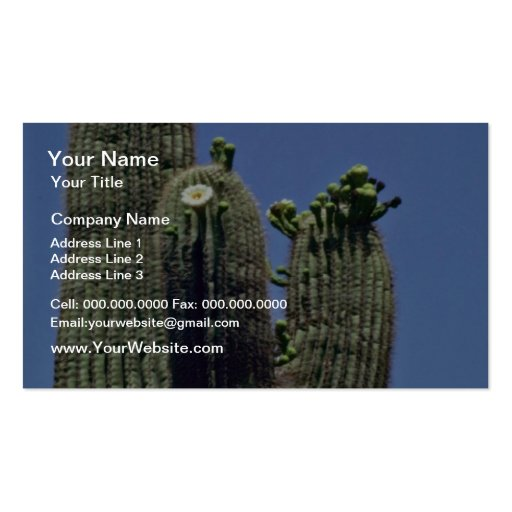 White Blooms On Saguaro Cactus flowers Business Cards