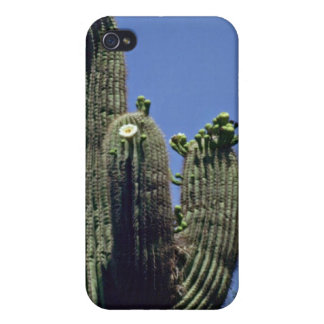 White Blooms On Saguaro Cactus flowers iPhone 4 Covers