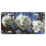 White Blossom Clusters Spring Flowering Pear Tree License Plate