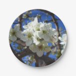 White Blossom Clusters Spring Flowering Pear Tree Paper Plate