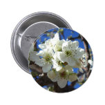 White Blossom Clusters Spring Flowering Pear Tree Pinback Button