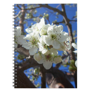 White Blossom Clusters Spring Flowering Pear Tree Spiral Notebook