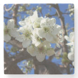 White Blossom Clusters Spring Flowering Pear Tree Stone Coaster