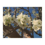 White Blossom Clusters Spring Flowering Pear Tree Wood Wall Art