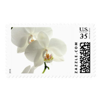 White Blossom Orchid Flower Floral Nature Postage