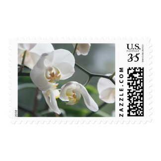 White Blossom Orchid Flower Floral Nature Stamp