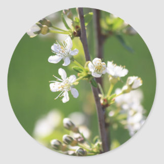 White Blossom Round Sticker