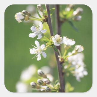 White Blossom Square Sticker