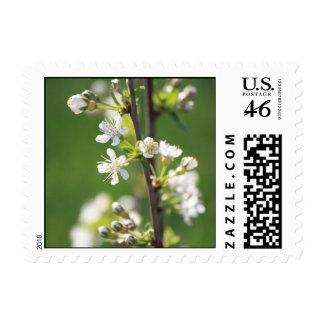 White Blossom Stamp