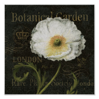 White Blossoms and Leaves Poster