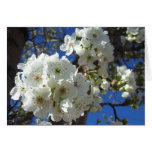 White Blossoms I Spring Floral Card