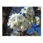 White Blossoms I Spring Floral Postcard