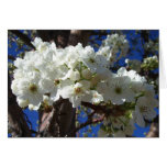 White Blossoms II Spring Blank Greeting Card