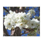 White Blossoms II Spring Flowering Tree Canvas Print