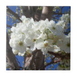 White Blossoms II Spring Flowering Tree Tile